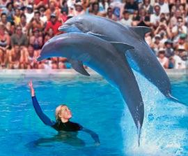 delfini parco zoomarine