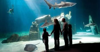 famiglia acquario di genova
