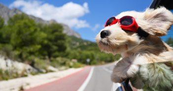 Le migliori mete pet-friendly in Italia