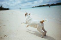 cane mare vacanza